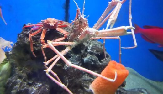 Susami Crustacean Aquarium (Wakayama) – Access, Hours & Fees