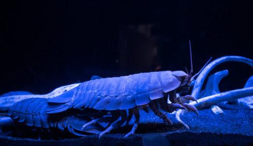 シーラカンスの展示で世界!静岡「沼津港深海水族館」で深海の世界を冒険しよう