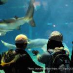 アクアワールド大洗水族館の料金・営業時間・アクセス