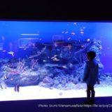 オープンしたてカワスイの魅力に迫ろう!川崎水族館の料金や見所を徹底解説