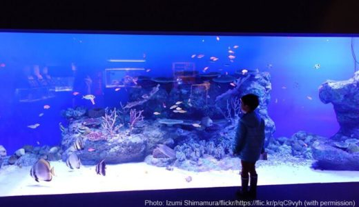 Oga Aquarium GAO (Akita) – Access & Fees