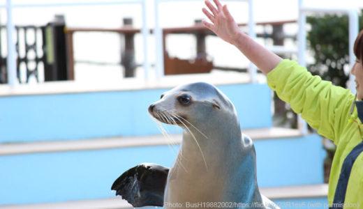 カエルの飼育数日本一の静岡「あわしまマリンパーク!無人島でワクワク体験も