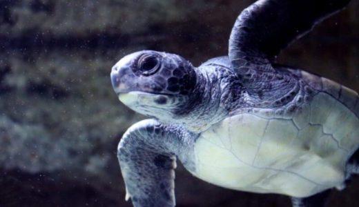ウミガメに会えるレアスポット!徳島「日和佐うみがめ博物館 カレッタ」を徹底解説