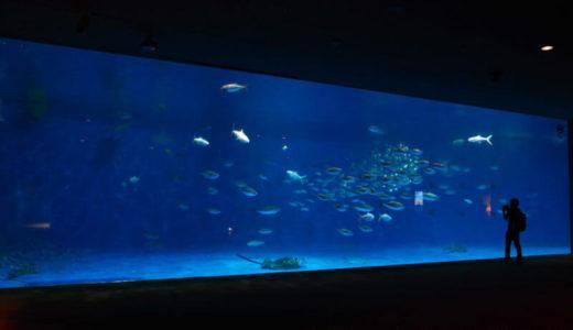 鹿児島「いおワールド かごしま水族館」の見所6選!お得なチケット情報も