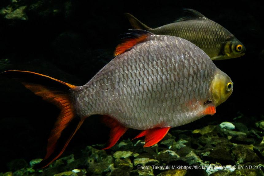 水族館_魚_生物
