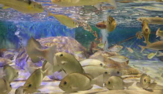 Uozu Aquarium (Toyama) – Access, Hours & Fees