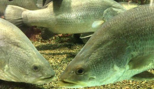 Sumie Family Aquarium (Miyazaki) – Access, Hours & Fees