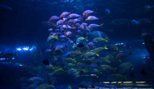 東京「しながわ水族館」の料金・営業時間・アクセス・見どころ