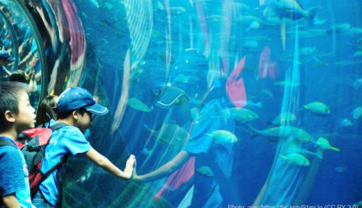 水族館のギフト券を購入する7つの方法!コスパ抜群なサイトもご紹介