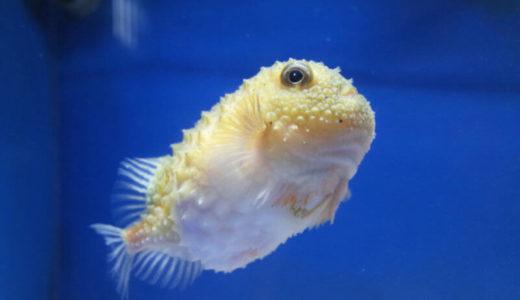 シースルー水槽でSNS映え最高!福井「越前松島水族館」の魅力に迫ろう