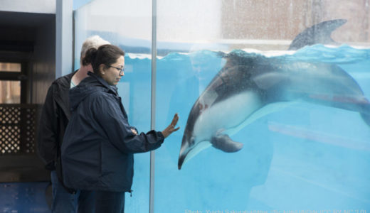 何度行っても楽しめる!静岡「下田海中水族館」でイルカとレア体験をしよう