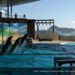 市立しものせき水族館 海響館の料金・営業時間・アクセス