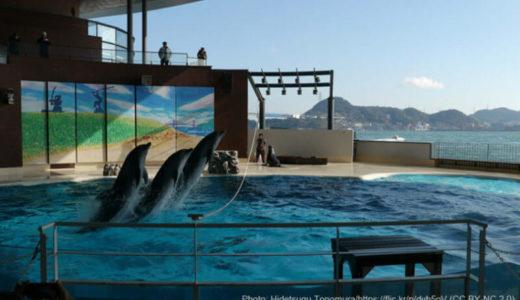 フグとペンギンの展示が高評価!山口「市立しものせき水族館 海響館」の知っ得情報