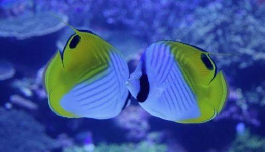 大分「大分マリーンパレス水族館 うみたまご」の料金・割引クーポン