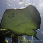 東海大学海洋科学博物館 海のはくぶつかんの料金・営業時間・アクセス