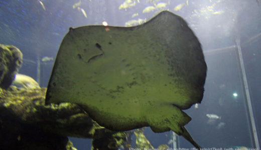 海の謎に迫ろう!静岡「東海大学海洋科学博物館 海のはくぶつかん」を徹底解説