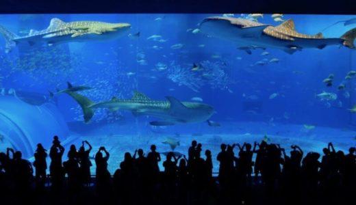 国内NO1の人気水族館!沖縄「美ら海水族館」のviewスポットをご紹介
