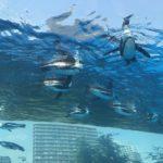 サンシャイン水族館の料金・営業時間・アクセス