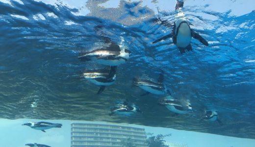東京「サンシャイン水族館」の料金・営業時間・アクセス・見どころ