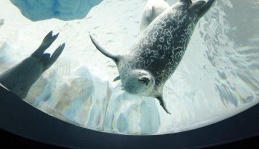 水族館で進めている保全の取り組み