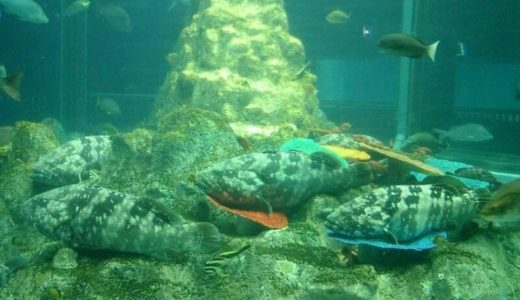 Ashizuri Kaiyokan Aquarium (Kochi) – Access, Hours & Fees