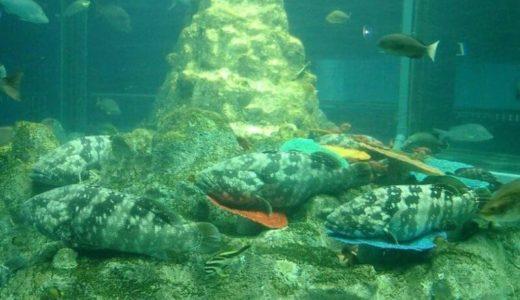 高知「足摺海洋館」の料金・営業時間・アクセス・見どころ