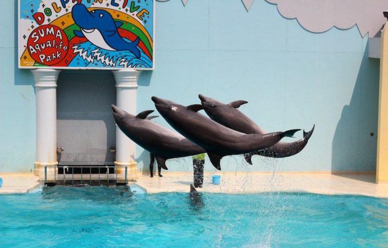 須磨水族館のイルカ