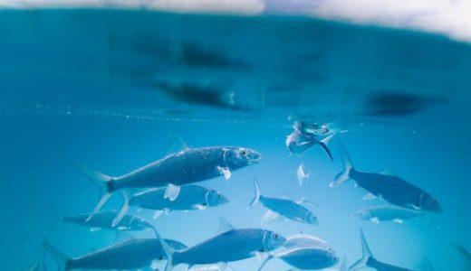 格安な料金が魅力の兵庫「姫路市立水族館」を徹底解説!姫路城からもアクセスOK