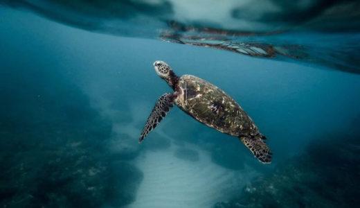 久米岛海龟博物馆(冲绳县)-营业时间・入馆费用