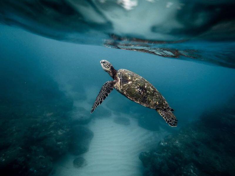 Sea Turtle Museum of Kumejima (Okinawa) - Access, Hours