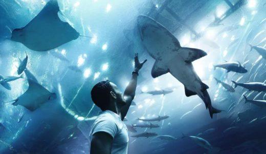 リピ確実「新潟市水族館マリンピア日本海」の魅力に迫ろう!基本情報も