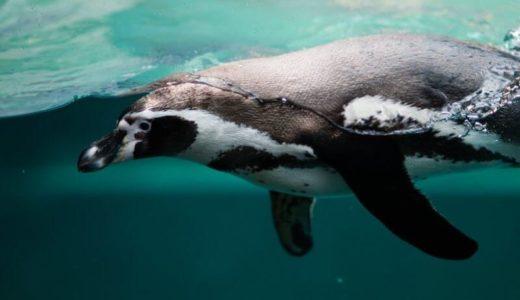 「長崎ペンギン水族館」の料金・営業時間・アクセス・割引クーポン