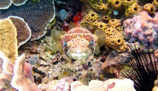 広島「マリホ水族館」の料金・営業時間・アクセス・見どころ