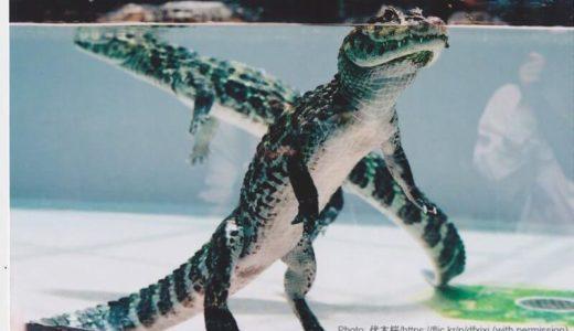 静岡「熱川バナナワニ園」の料金・営業時間・アクセス・見どころ