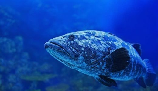 神奈川「橫浜市立間門小学校 付属海水水族館」の見どころ