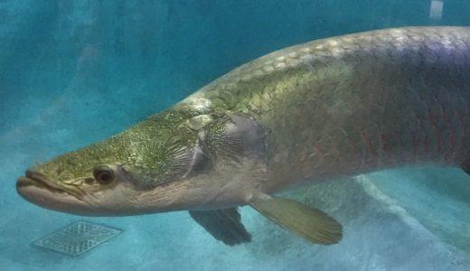 世界の淡水魚に会いに行こう!大分「白池地獄 熱帯魚館」を徹底リサーチ