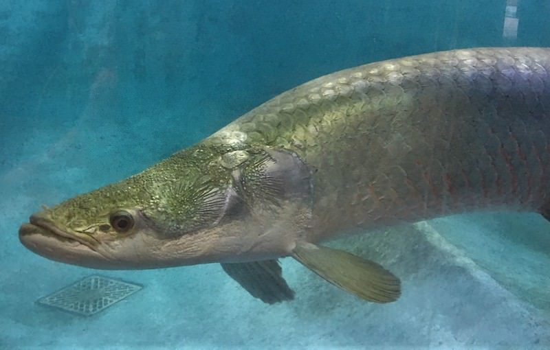 世界の淡水魚に会いに行こう!大分「白池地獄 熱帯魚館」を徹底リサーチ   SUIZOK全国水族館ネット