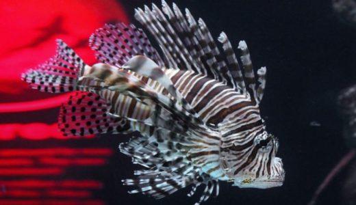 無料で広島で遊べる!「福山大学マリンバイオセンター水族館」が断トツおすすめ
