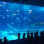 「沖縄美ら海水族館」の見どころ・楽しみ方