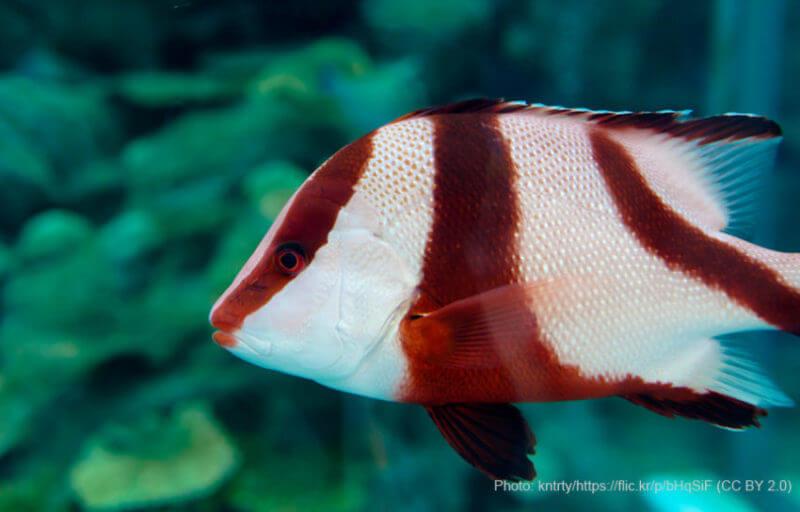 水族館_魚
