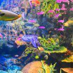 「サンシャイン水族館」の見どころ・楽しみ方