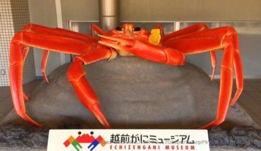 ゲーム感覚で楽しめる福井「越前がにミュージアム」の見所4選!基本情報も