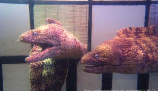 イルカとドキドキ体験ができる!?熊本「わくわく海中水族館 シードーナツ」を徹底解説