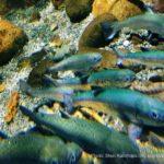 小樽市「おたる水族館」の見どころ・楽しみ方