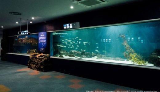 北海道「サンピアザ水族館」の料金・営業時間・アクセス