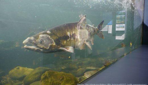 北海道「北の大地の水族館(山の水族館)」の料金・営業時間・アクセス・見どころ