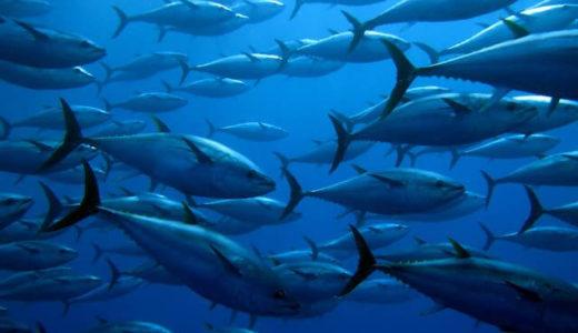 葛西臨海水族園がイルカがいなくても魅力たっぷりな理由とは?
