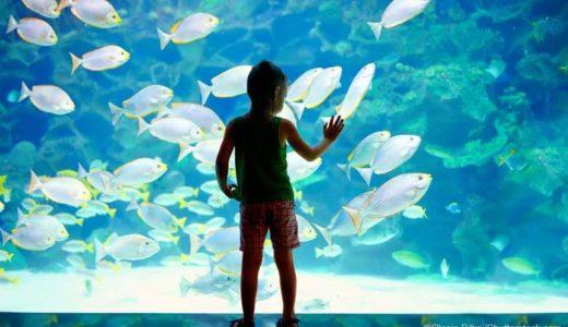 秋冬に開催する水族館お泊りイベント情報