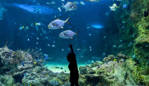 群馬からアクセス抜群!県内から近いおすすめの水族館9スポット