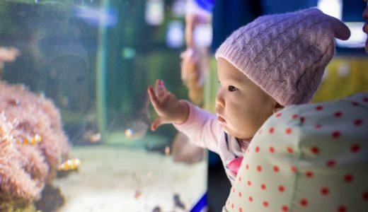 赤ちゃんと水族館へおでかけ!ワクワクの水族館デビュー